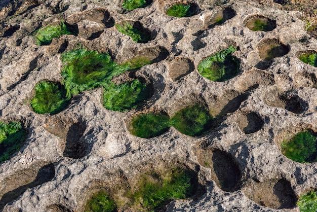 Klifoppervlak met ronde gaten bedekt met groen mos