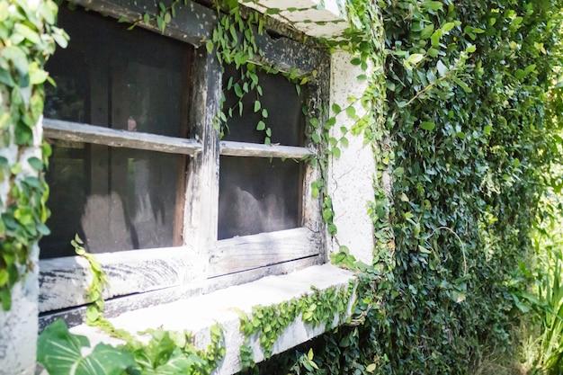 Klimop rond baksteenhuis in lokale toevlucht