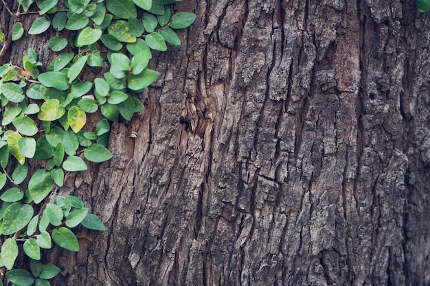 Klimop uitgerekt tot de boomschors geeft een natuurlijk gevoel populair om de tuin te versieren