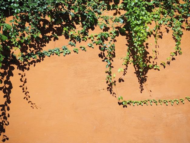 Klimplantbladeren op oranje concrete muur