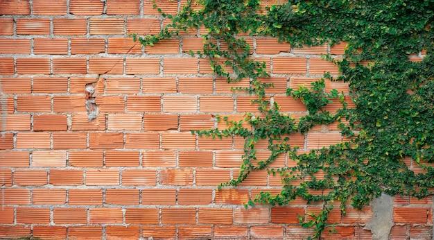 Klimplanten op oranje bakstenen muurachtergrond.
