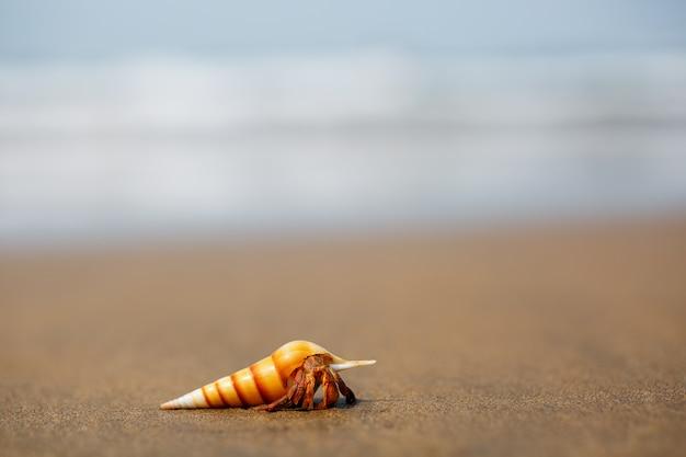 Kluizenaarkrab op het strand in varkala
