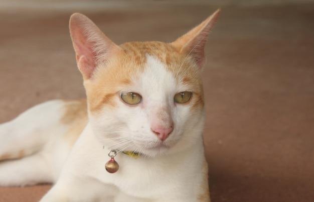 Knappe kat denkt aan iets