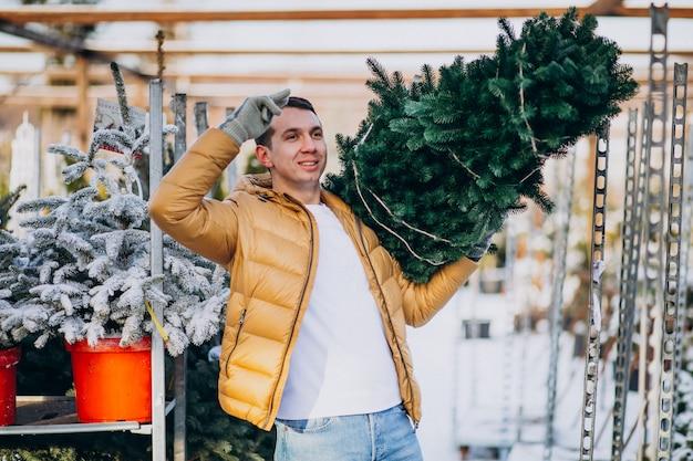 Knappe mens die een kerstmisboom in een serre kiest