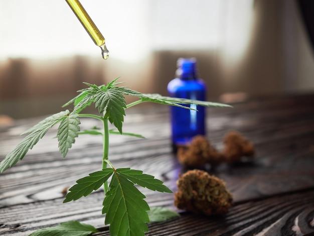 Knoppen en marihuana-olie op een rustieke tafel