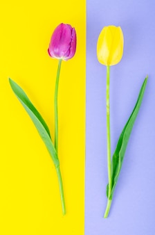 Knoppen van kleurrijke tulpen op lichte achtergrond.
