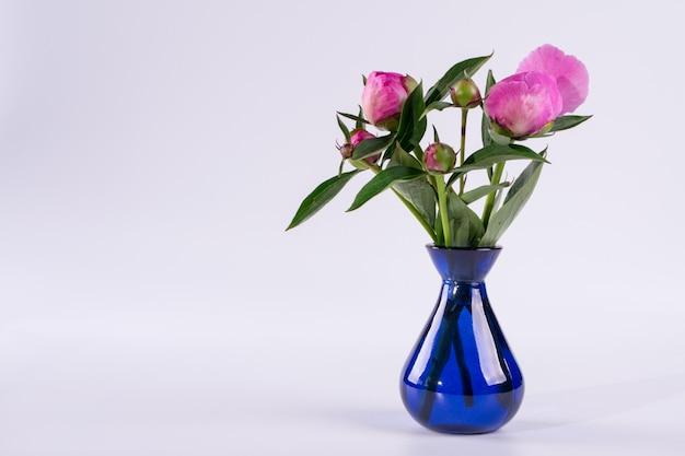 Knoppen van pioenroos in een blauwe vaas op witte ondergrond