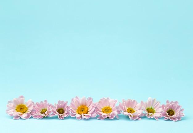 Knoppen van roze bloemen met roze bloemblaadjes op een gekleurde minimale achtergrond. floral achtergrond concept