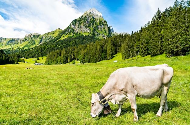 Koe bij oberseetal in de zwitserse alpen Premium Foto