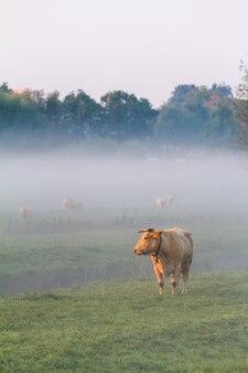 Koe in de mist