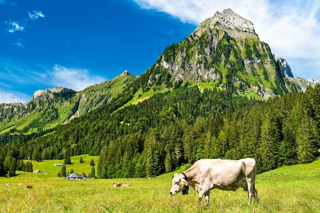 Koe in de zwitserse alpen