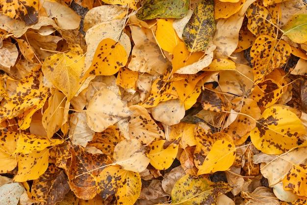 Koele achtergrond van gele gevallen herfstbladeren