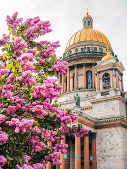 Koepel van st. isaac's cathedral onder een tak van lila bloemen in sint-petersburg