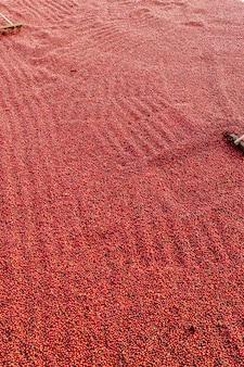 Koffiebonen drogen in de zon. koffieplantages op de boerderij