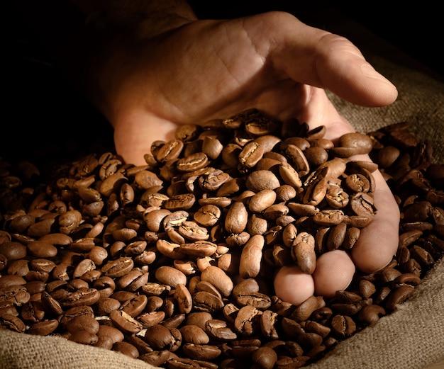 Koffiebonen in de hand op donkere achtergrond. hand pakt een handvol koffiebonen uit jute zak