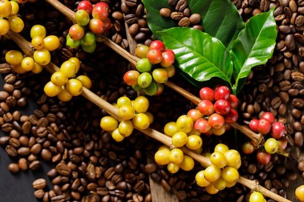 Koffiebonen op koffie groene bladeren op houten achtergrond, verse koffiebonen op houten achtergrond