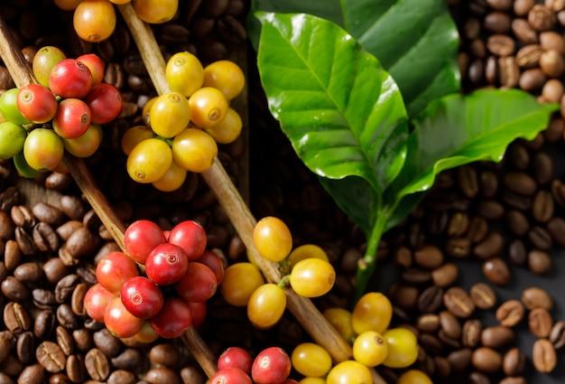 Koffiebonen op koffie groene bladeren op houten achtergrond