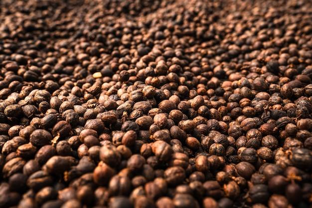 Koffiebonen worden gedroogd in de kas. koffieproces