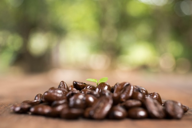 Koffieboom en koffieboon, concept