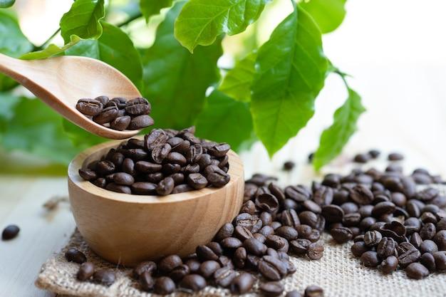 Koffieboon medium geroosterd in houten kom met blad in verse ochtend.