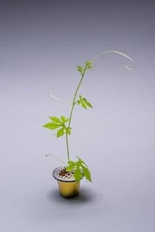 Koffiecapsule artistiek hergebruikt als een kleine kan met een kruipende plant die uit de capsule groeit