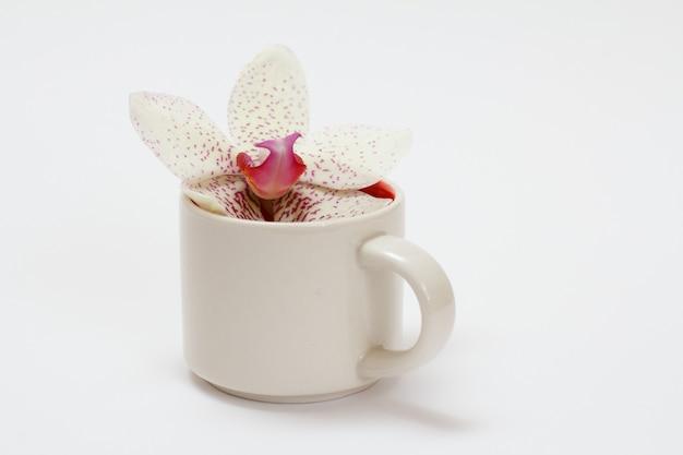 Koffiekopje met orchideebloemknop op een witte achtergrond.