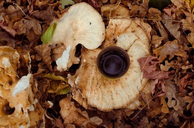 Koffiemok in de herfst gevallen bladeren, bruine kleuren