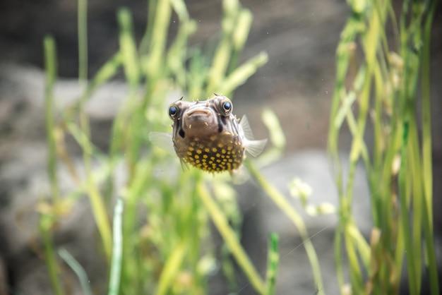Kogelvis close-up Premium Foto