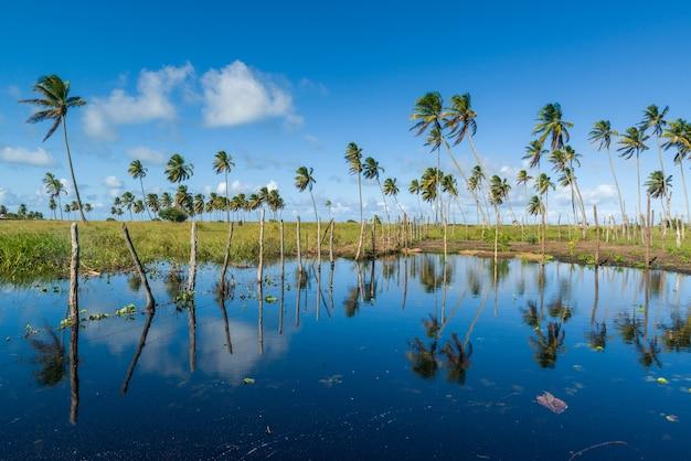 Kokos- en zoetwaterlagune op het strand van lucena, in de buurt van joao pessoa, paraiba, brazilië op 16 mei 2021.