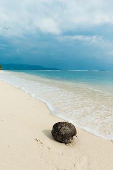Kokos op het strand