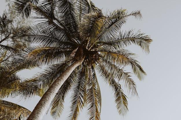 Kokosgroene palmbomen tegen blauwe hemel met retro of vintage kleuren en tinten