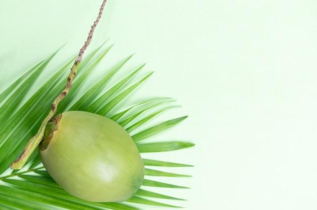Kokosnoot en groene bladpalm op pastelkleur groene achtergrond. wereld kokosnoot dag of zomer.