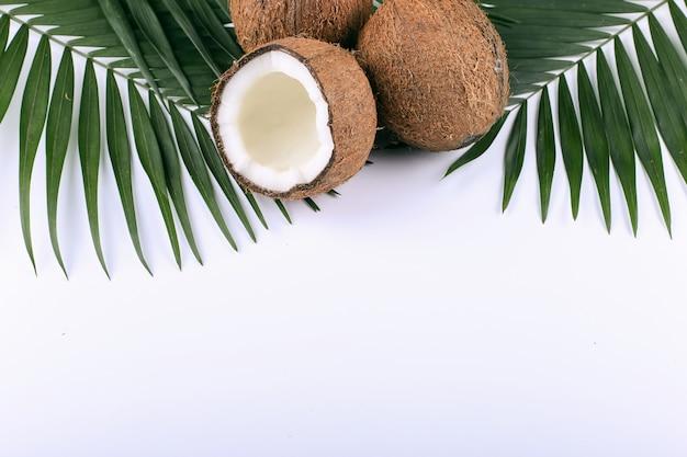 Kokosnoot en palmbladen, exemplaarruimte. zomerstemming, tropisch, leeg.