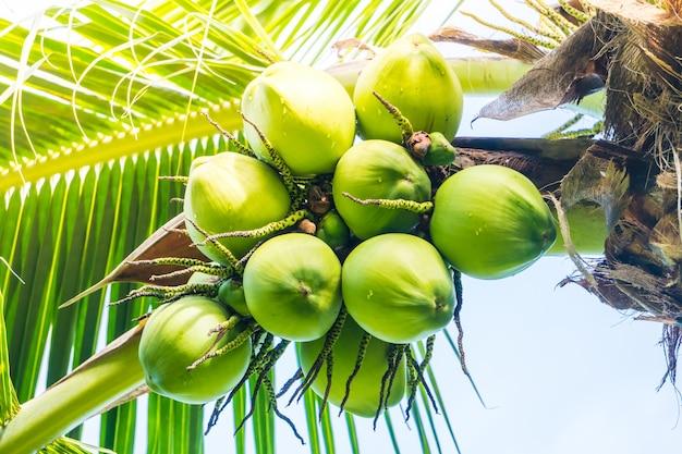 Kokosnoot fruit