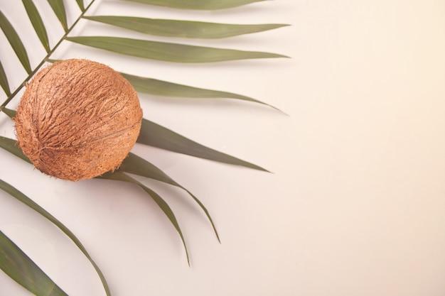 Kokosnoot op de lichte achtergrond op het palmblad