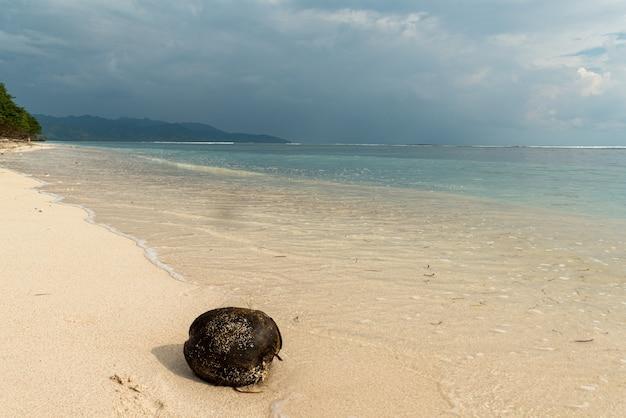 Kokosnoot op het strand