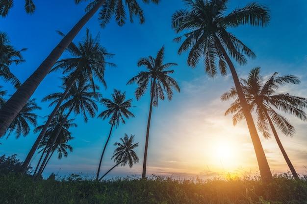 Kokosnoot palm bomen silhouetten op strand