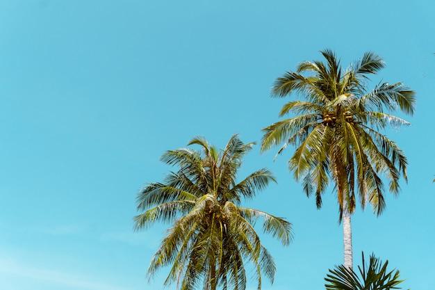 Kokosnoot palm strand zomer concept