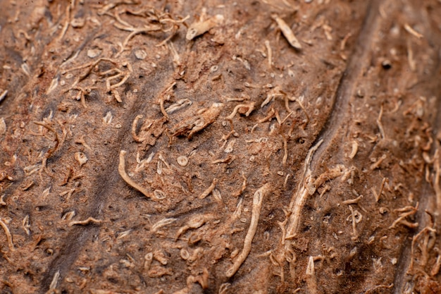 Kokosnoot structuur macro. bloemen achtergrond.