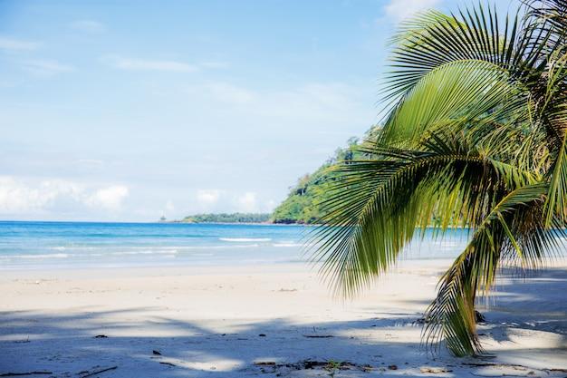 Kokosnootbladeren op strand.
