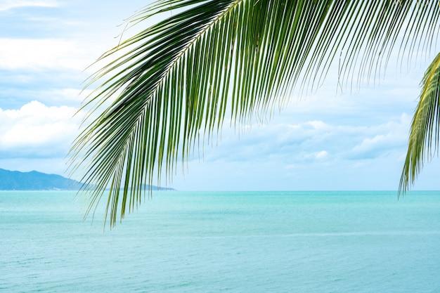 Kokosnotenblad op overzees en blauwe hemelachtergrond