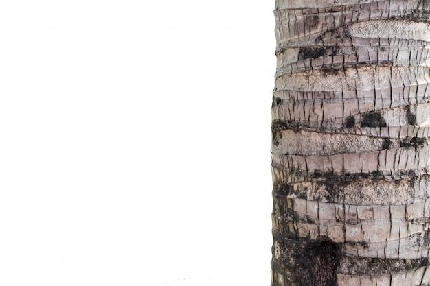 Kokosnotenboomstam op witte achtergrond