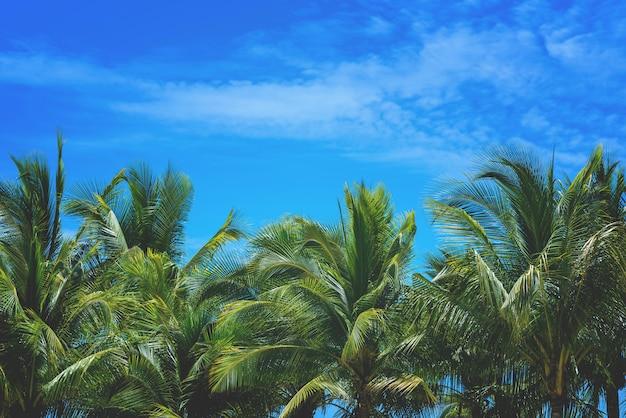 Kokosnotenpalm en hemelaard op zee achtergrond met exemplaarruimte.