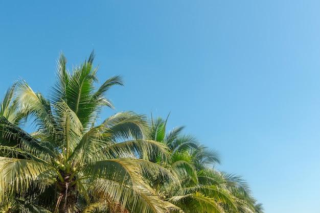 Kokosnotenpalm in blauwe hemel