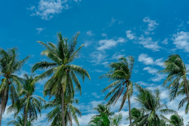 Kokosnotenpalm met blauwe hemel en wolken. palm plantage. kokosnoot boerderij. wind langzaam blazende groene bladeren van kokospalm. tropische boom met zomerhemel en wolken.
