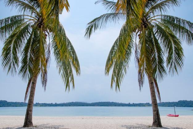 Kokosnotenpalm met kajak op het strand.