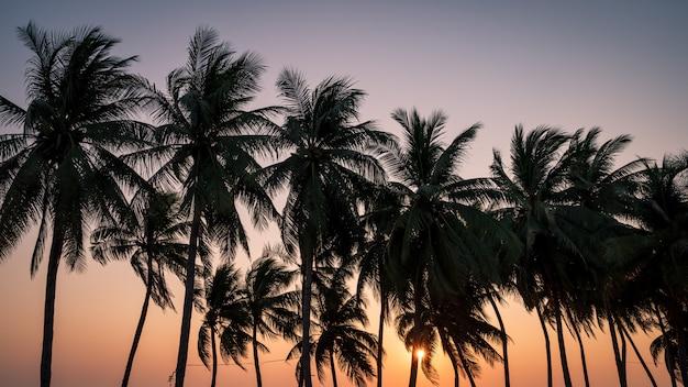 Kokosnotenpalm met zonsonderganghemel op het strand in thailand