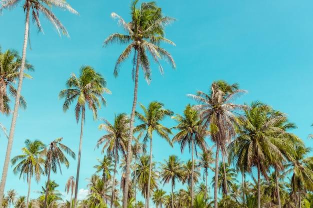 Kokosnotenpalm onder blauwe hemel.