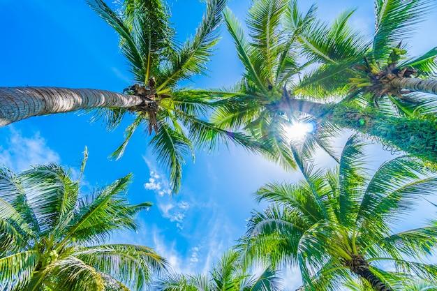 Kokosnotenpalm op blauwe hemel