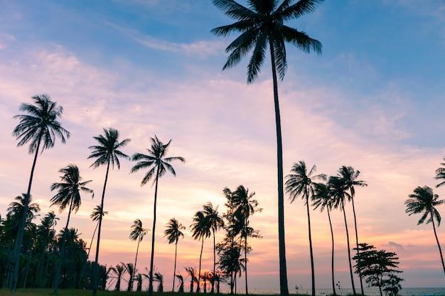 Kokosnotenpalm op zonsondergang of zonsopganghemel